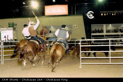 CKW Shorty - Chickasaw 164 - Chickasaw King